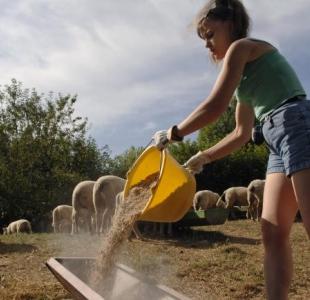 Des nouvelles avancées pour faciliter l'installation des jeunes agriculteurs