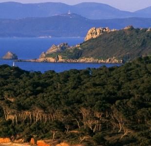 Incendies : le Gouvernement se mobilise pour la protection et la restauration de la biodiversité