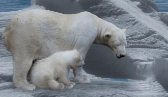 Le rapport du GIEC démontre scientifiquement l'urgence d'agir pour le climat
