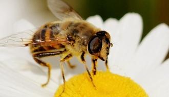 Pour une meilleure protection des abeilles et des insectes pollinisateurs