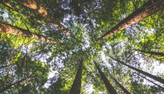 Une forêt d'arbres