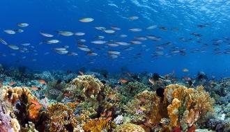 Corail et poissons