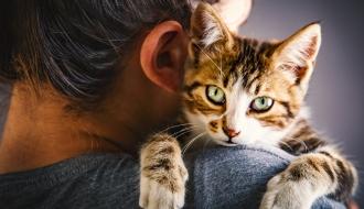 De nouvelles mesures pour améliorer le bien-être animal
