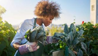 Agriculture urbaine | 27 projets lauréats pour des « Quartiers fertiles » !