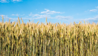 L'agriculture : Enjeu de reconquête