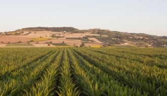 G20 Agriculture: France defends a proactive approach to reducing the effects of climate change