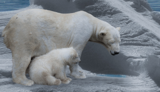 The IPCC report scientifically confirms the need for urgent action on climate change