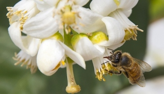 The National Assembly votes in favour of the ban on neonicotinoid insecticides in 2018