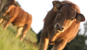 Agreement with China on beef exports