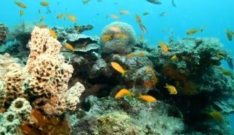 World Oceans Day: French Research Institute for the Marine Environment (Ifremer) supports better marine resource management