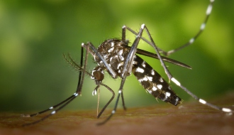 Epidémie de Zika en Guyane et aux Antilles