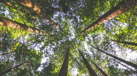 Accèder à la page Deux instances créées pour la protection du climat