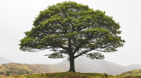 Accèder à la page Ce qu'il faut retenir du 2e Conseil de défense écologique