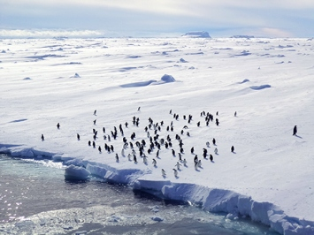 French Southern and Antarctic Lands' national nature reserve