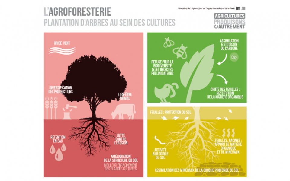 Infographie sur l'agro-foresterie