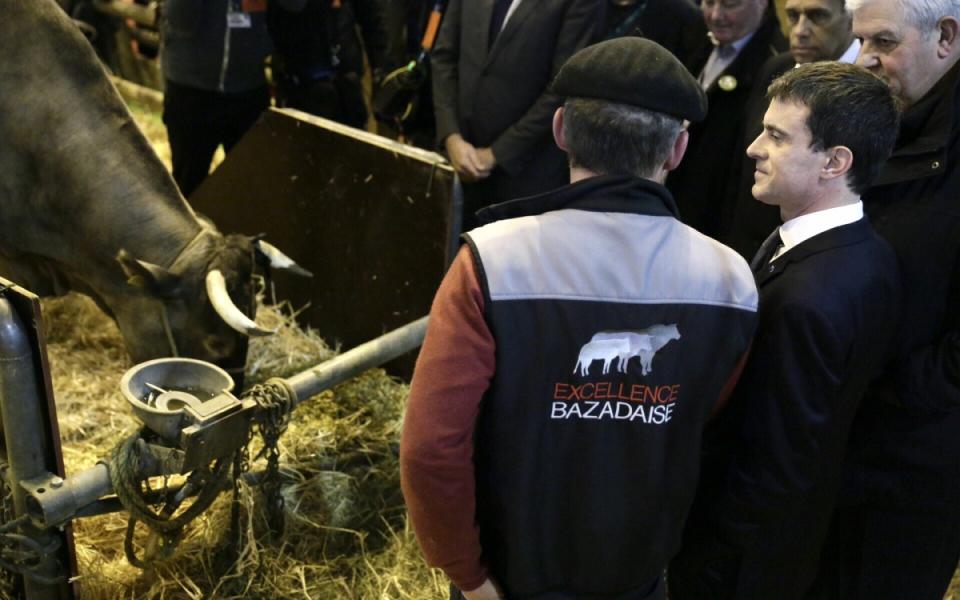 Manuel Valls et la mascotte du salon, Cerise, une vache bazadaise