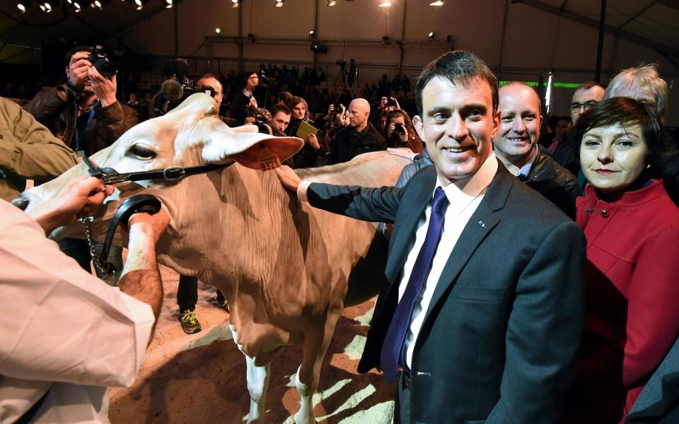 Manuel Valls visite les installations des éleveurs du Concours européen de la race Brune