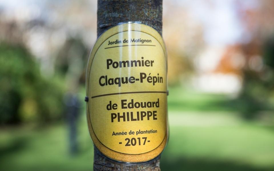 """L'étiquette d'identification du """"Pommier claque-pépin"""""""