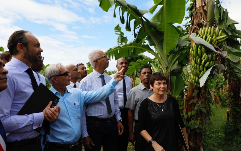 Constat des dégâts dans la bananeraie de Trois-Rivières