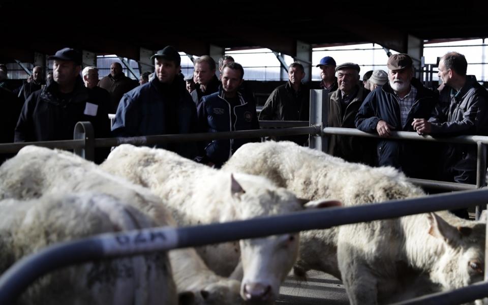 Une vue du marché aux bestiaux (ovins et bovins) des Grivelles. Une acitivité qui produit 380 000 euros par semaine de chiffre d'affaires - 2 mai 2018