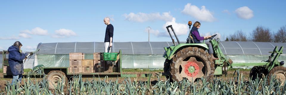Photo de maraîchers en agriculture biologique à Auxonnes, distribuant leurs légumes sur le marché de Dijon et dans des AMAP
