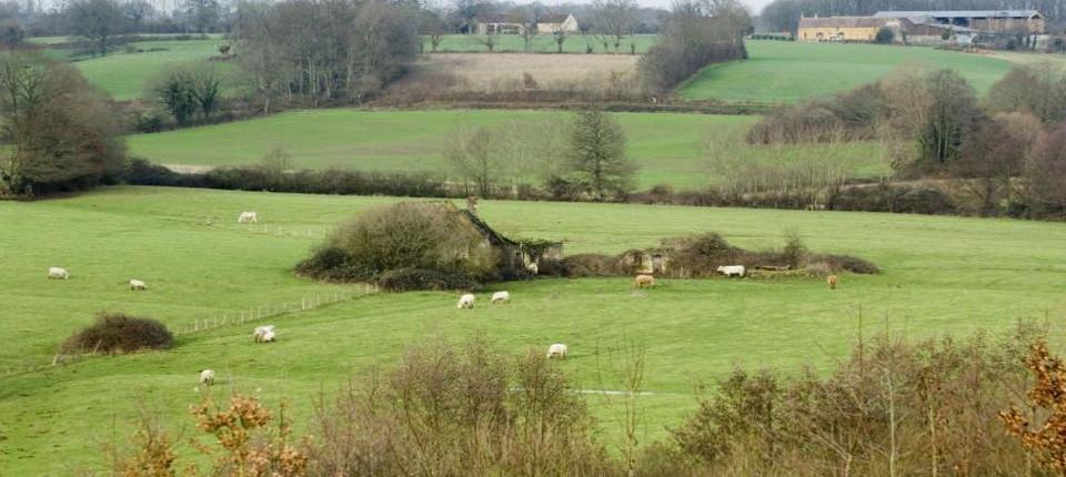 Photo d'un élevage demoutons en pleine nature