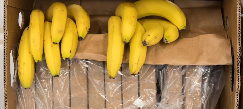 Bananes et cartons de cocaïne