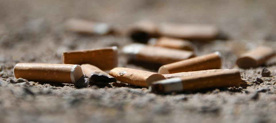 Des mégots de cigarettes écrasés sur le sol