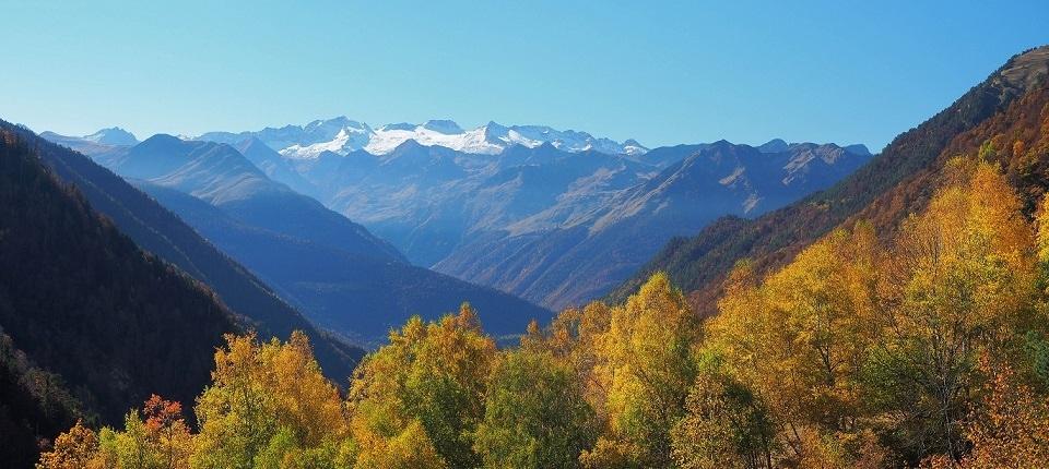 Forêt et glacier