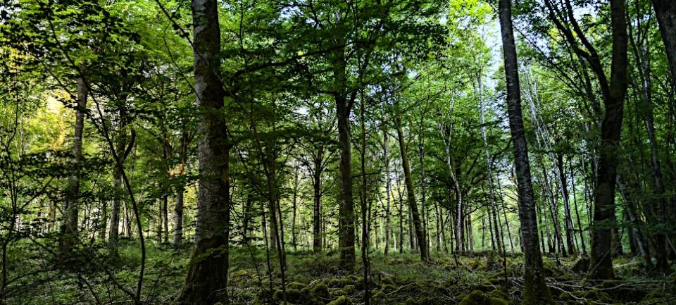 Forêt de Langres