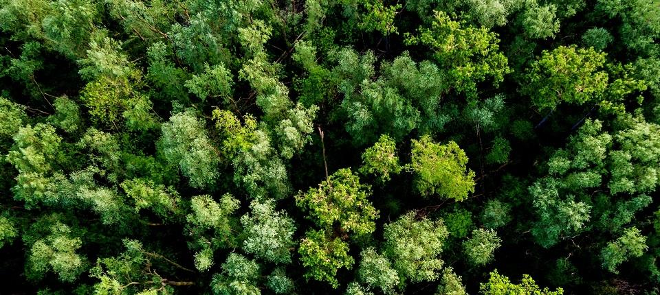 Cîme des arbres d'une forêt