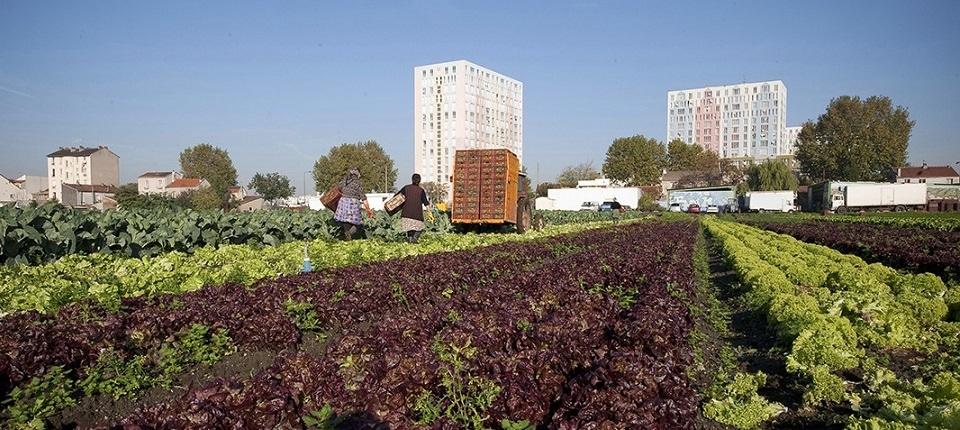 Un jardin potager en ville