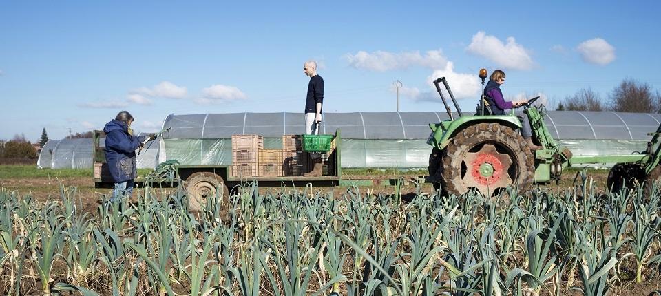 Farmers in their field
