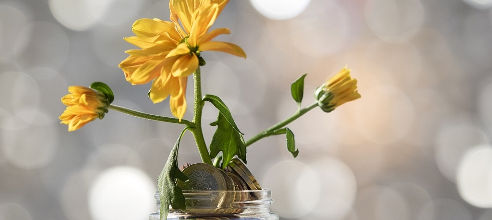 Flowerpot of crystal with a plant, growing inside a heap of coins of Euro
