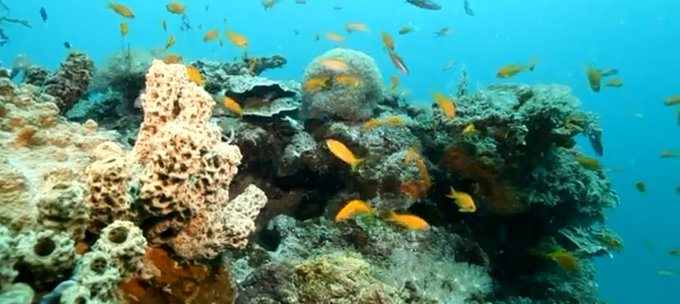 Fishes in the ocean