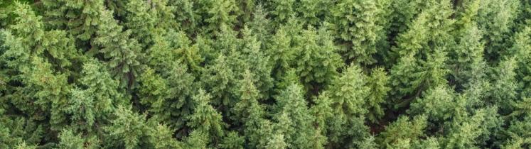 Forêt vue du ciel