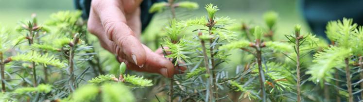 La main d'une personne caresse des jeunes plants d'arbres